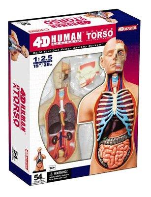 4D Master 4D puzzel - Wetenschap biologie Super Deluxe 26080 torso 1:2,5 Scale