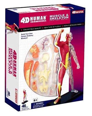 4D Master 4D puzzel - Wetenschap biologie 26058 spier en skelet 1:10 Scale