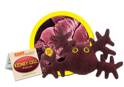 Giant Microbes Kidney Cell