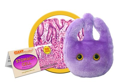 Giant Microbes Stomach Cell