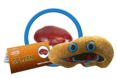 Giant Microbes Organ - Science Biology Plush Spleen