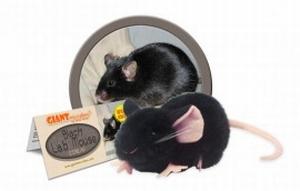 Giant Microbes Black Lab Mouse (zwarte laboratorium muis)