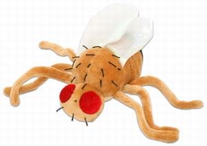 Giant Microbes Fruit fly (Drosophila melanogaster)