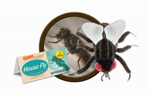 Giant Microbes House fly (huisvlieg)