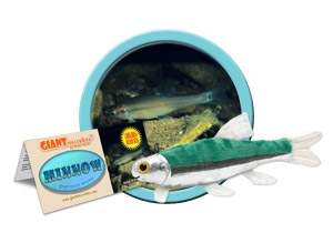 Giant Microbes Minnow (Pimephales Notatus - Voorn)