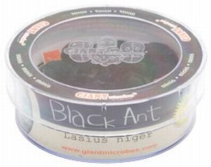 Giant Microbes Petri schaal Black ant (zwarte mier)