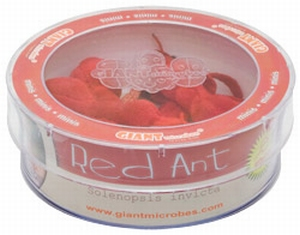Giant Microbes Petri schaal Red ant (Rode mier)