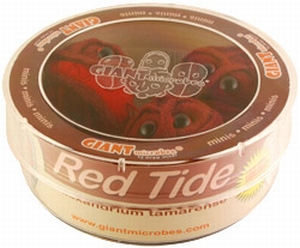 Giant Microbes Petri schaal Red tide (Rode vloed alg)