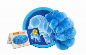 Giant Microbes Waterbear (Mosbeertje/ Waterbeer)