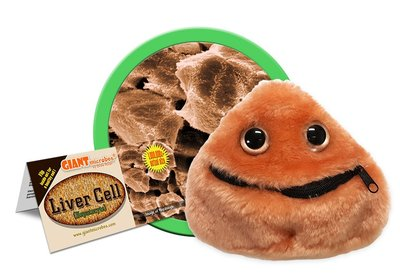 Giant Microbes Liver cell (Lever cel - Hepatocyte)